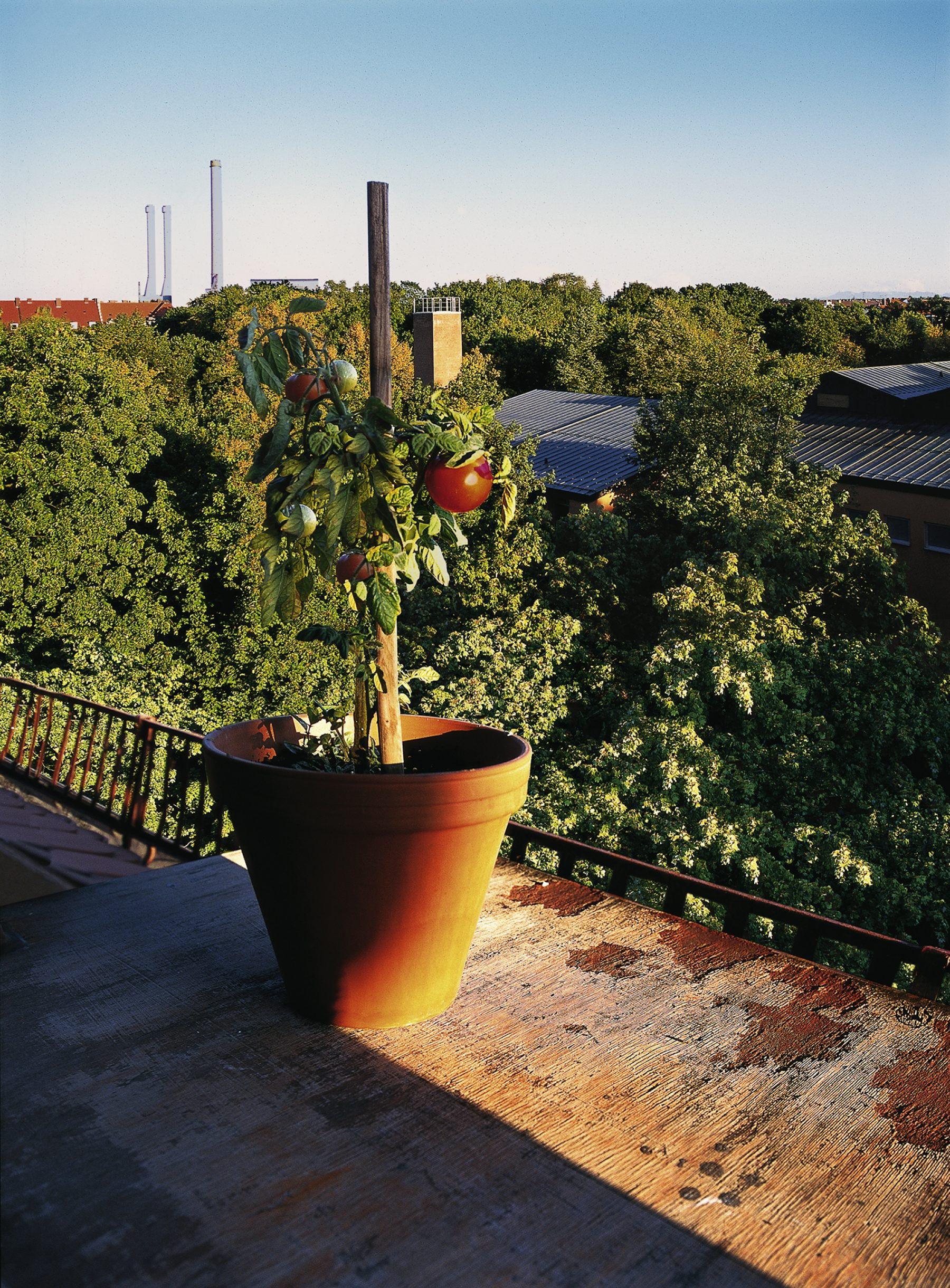 Tomatemfenster