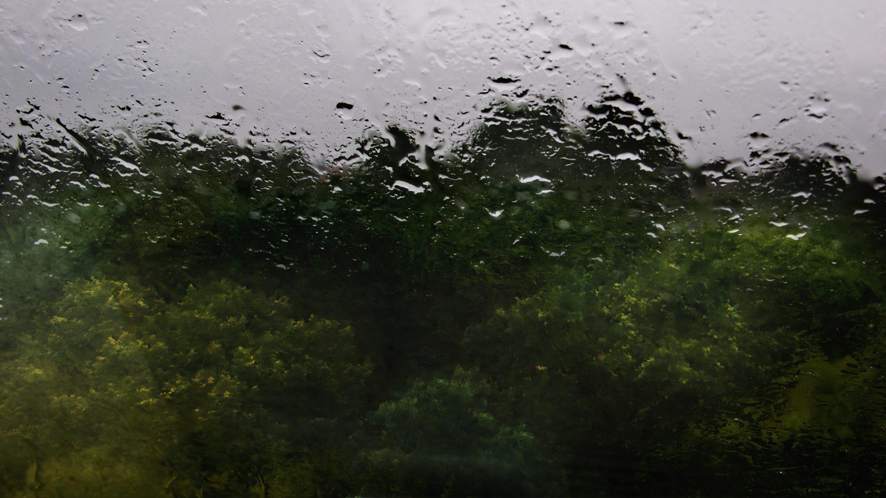 Regen Seelower 3