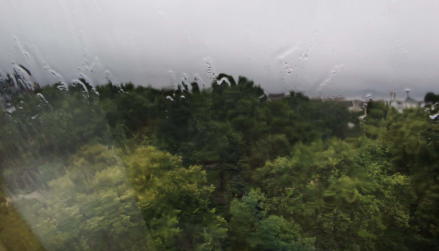Regen Seelower 1