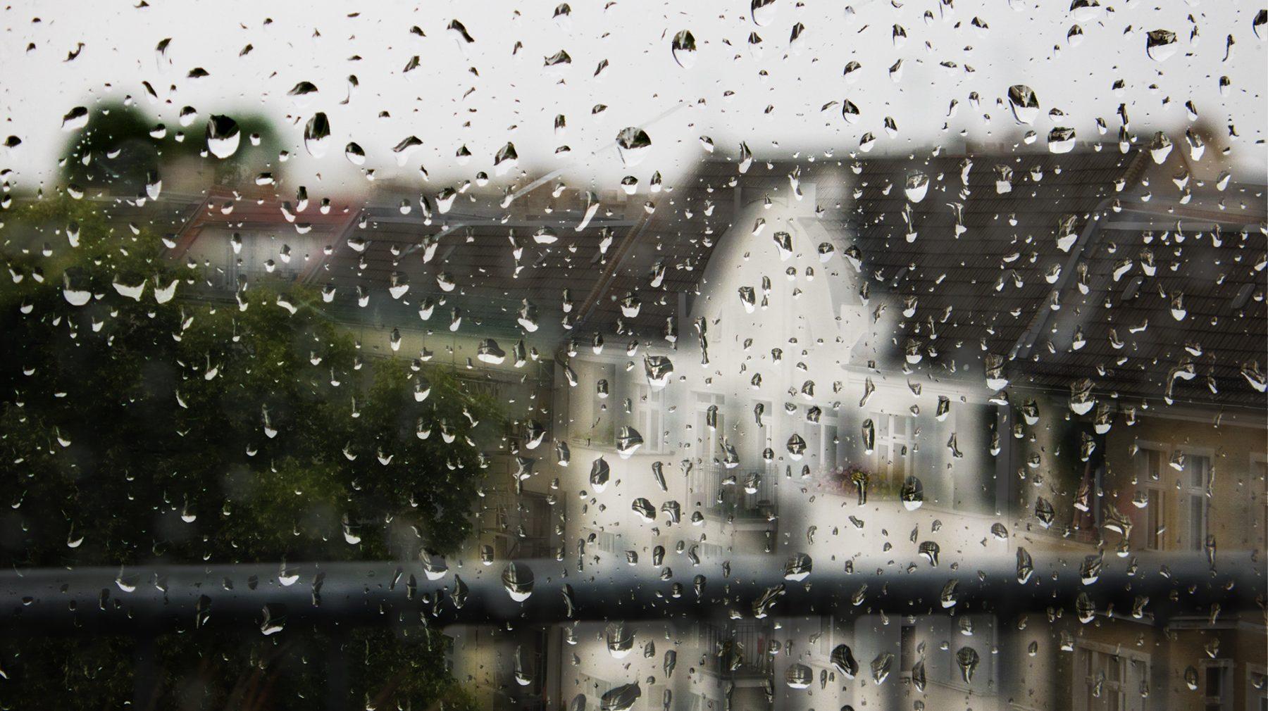 Regen Seelower