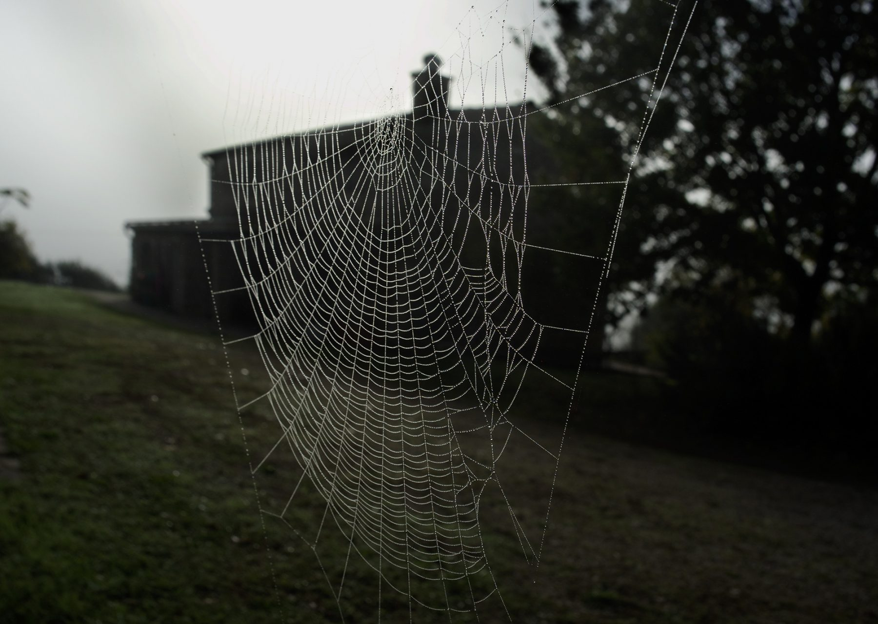 Spinnenhaus