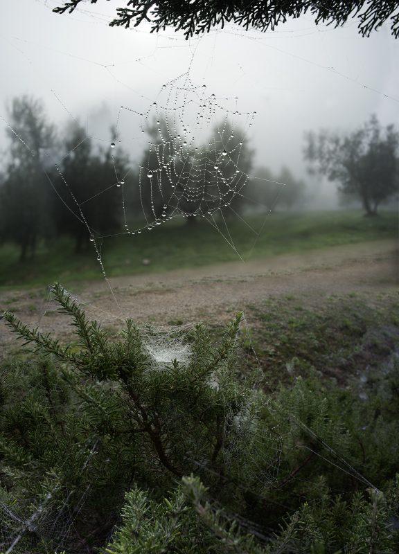 Netzt im Himmel