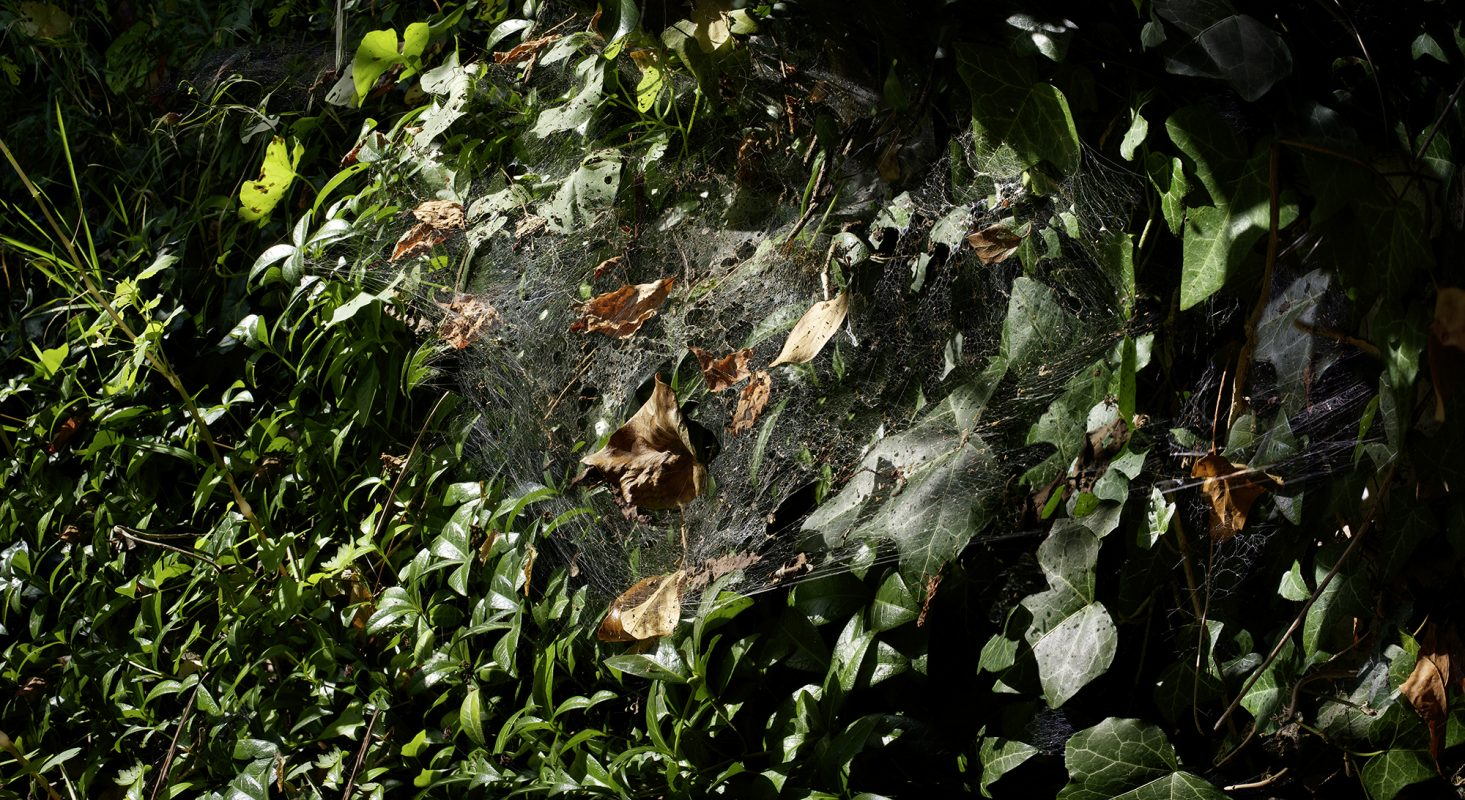 Spinne Schuppen