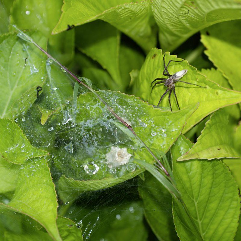 Mit großer Spinne