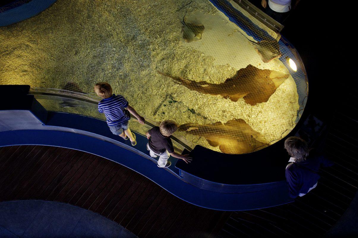 Aquarium Barcelona, Rochenbecken, Kinder