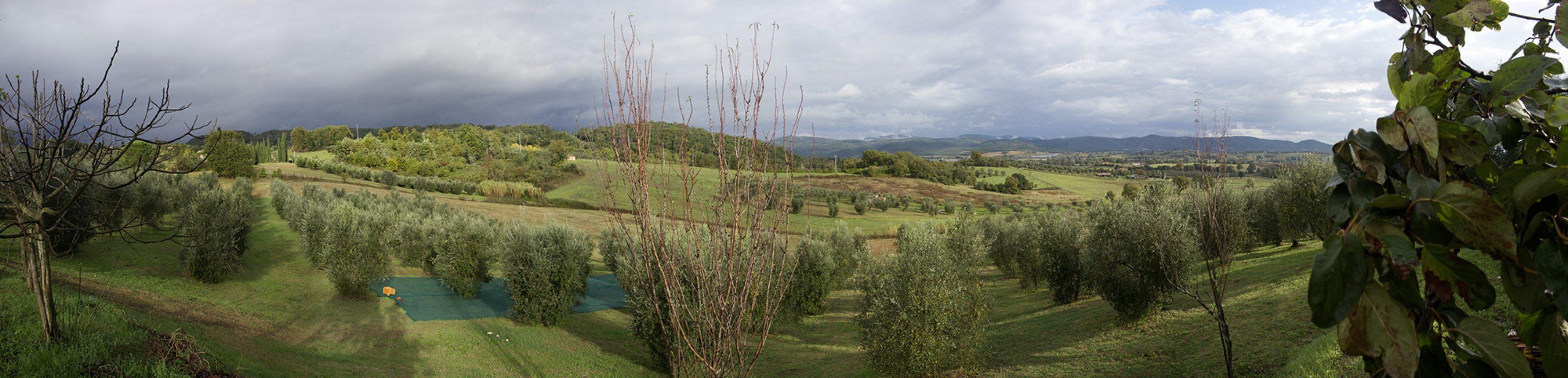 Toskana, Olivenernte, Landschaft, Panorama