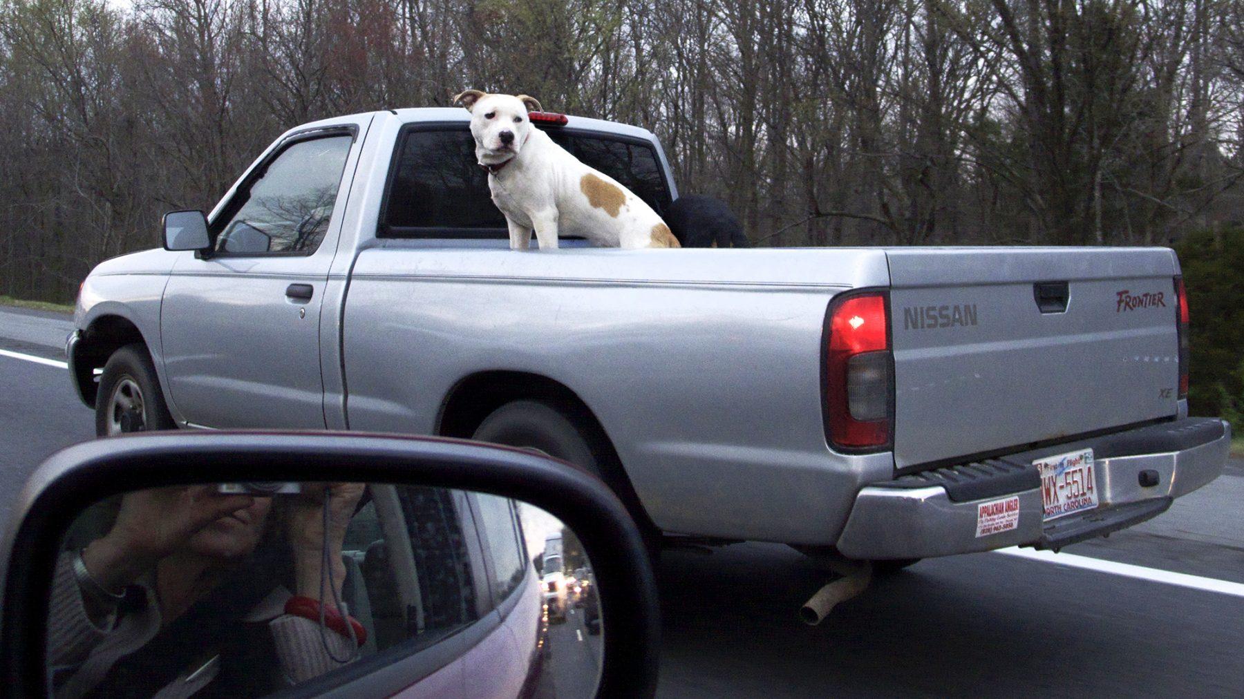 Hund auf Ford