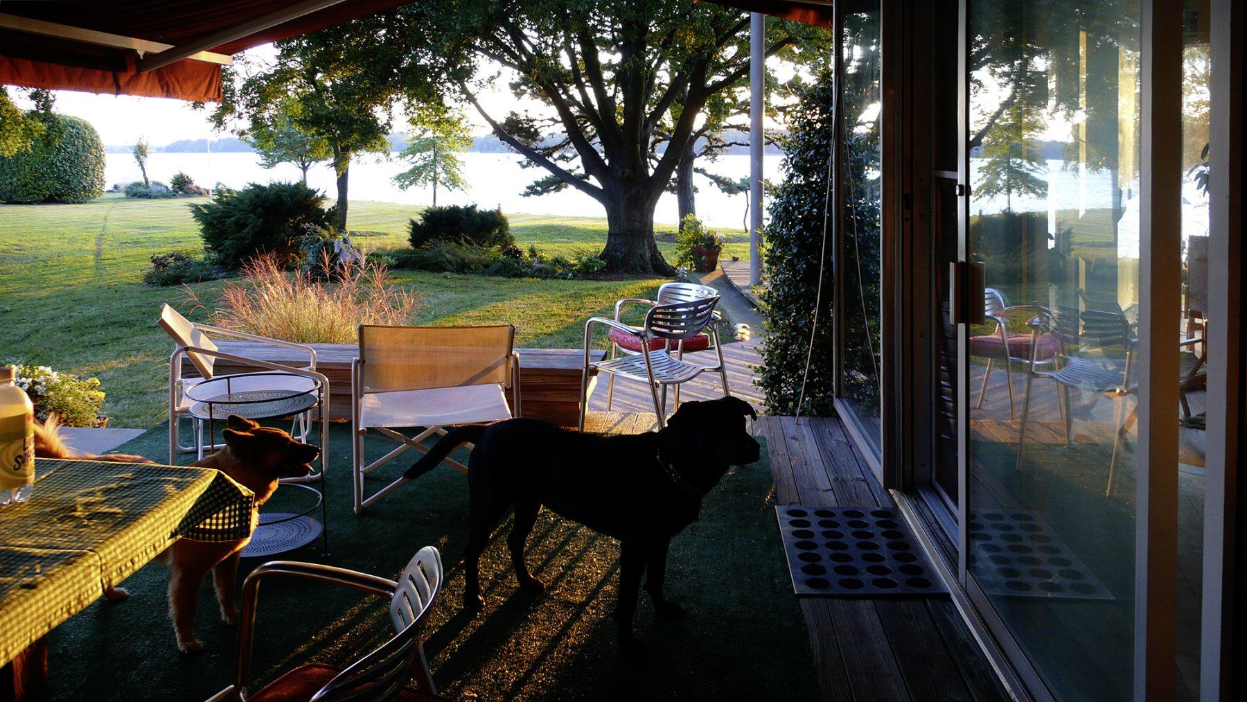 Sommerhaus Hund