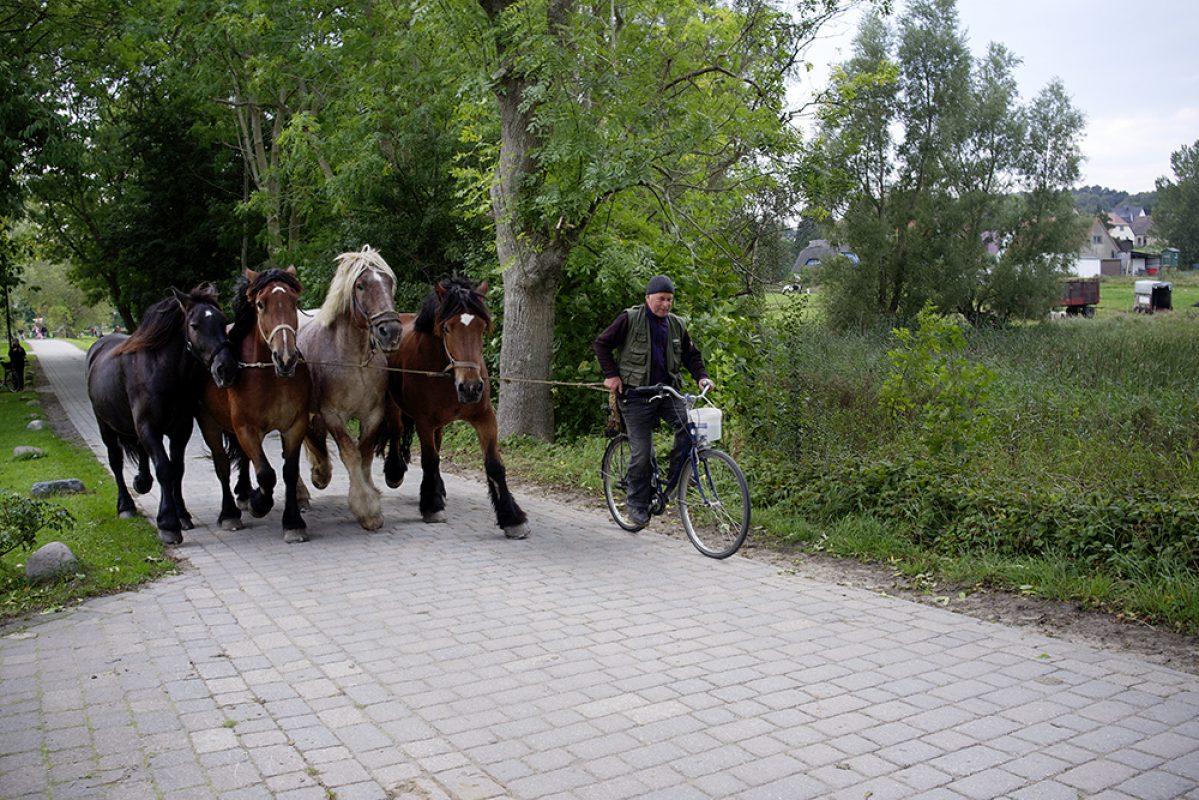 Hiddensee, Pferde, Galopp, Ackergäule