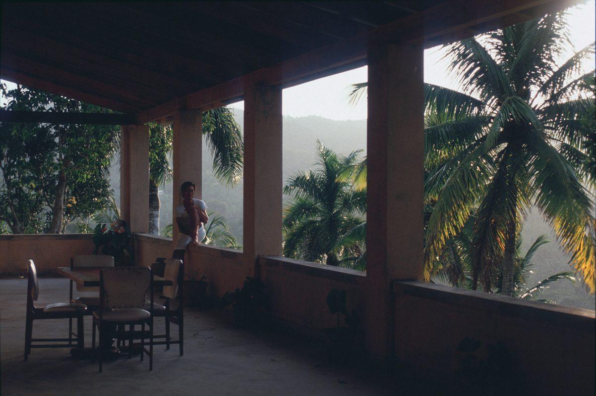 Jamaika, Dschungel, Palmen