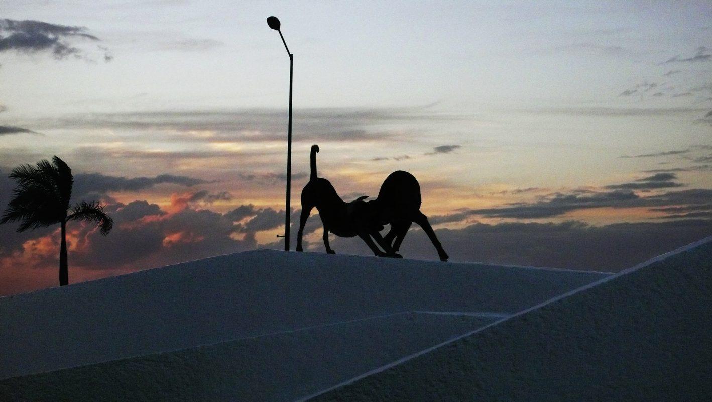 Mexiko, Campeche, spielende Hunde, Silhouette